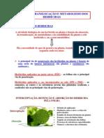 Aula_Absorção_Translocação_Metabolismo