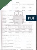 Prueba N° 7.pdf