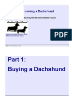 Buying and Owning a Dachshund