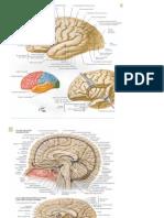 Cerebro - Configuración interna