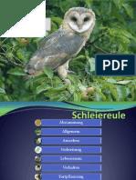 Schleiereule falsch.pptx2.pptx