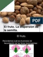 3 El Fruto Dispersion Ppt