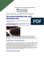 Growing Raspberries & Blackberries