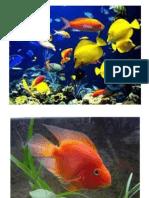 Los peces 7 Nov.pptx