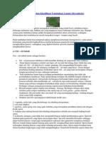 Ciri-ciri, Reproduksi, dan Klasifikasi Tumbuhan Lumut (Bryophyta)