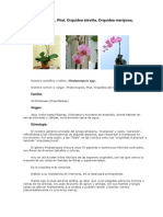 ORQUIDEA-Phalaenopsis2