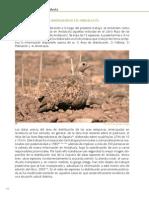 Las_aves_esteparias_en_Andalucia5.pdf