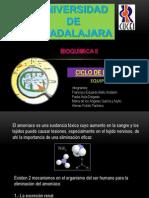 Ciclo de La Urea1