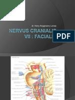 Nervus Cranialis VII