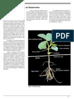 Como a Planta de Soja Se Desenvolve