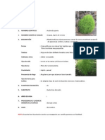 Ficha Tecnica de Plantas