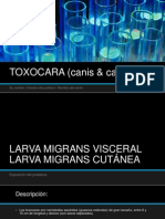 TOXOCARA (Canis & Catis)