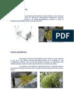 especies forestales antartida.docx