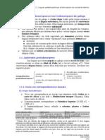 2. Linguas paleohispánicas e latinización do noroeste ibérico