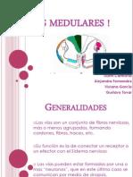 Expo Vias Medulares !