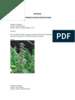 BOTANICa 5 Plantas