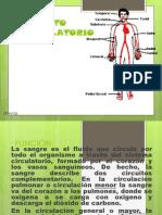 Aparato Circulatorio Parte Vero