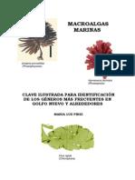 Macro Algas