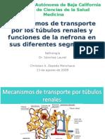 Mecanismos de transporte y función de la nefrona.