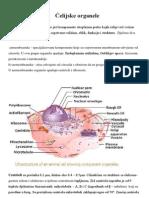 Celijske organele
