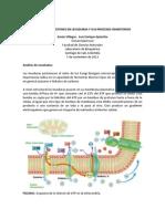 Bombeo de Protones en Levaduras y Sus Procesos Inhibitorios