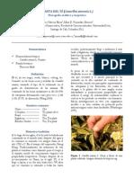 Monografía Camellia sinensis - Mateo Piñeros Rhon y Mara D. Kujundzic