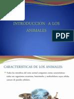 Introduccion a Los Animales