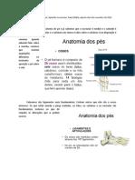 Anatomia do pé, Aparelho Locomotor, Paulo Mafra, Aula do dia 6 de novembro de 2013