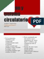 coraznysistemacirculatorio-110516125833-phpapp01