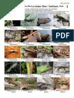 Imagenes Reptiles