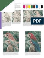 ... - Lessons Coloured Pencils - Parrot