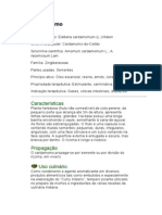 Cardamomo - Elletaria cardamomum (L.) - Ficha Completa Ilustrada