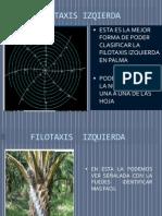 presenataciondefilotaxis-091122101928-phpapp02