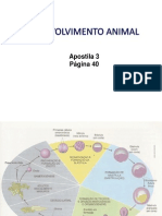 Aula XI- Desenvolvimento Animal