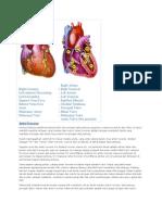Anatomy Jantung