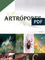 ARTROPODES  - 7º 2013