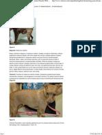 Applied Dermatology_ Postcard Presentation_ a Miniature Pinscher With Alopecia Part 2 _ Vetlearn