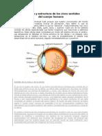 Anatomía y estructura de los cinco sentidos (1)