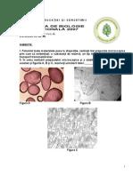 Biologie Etapana Clasa a xa Practica ix