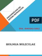 Endocrinologia Del Sistema Reproductor CONFERENCIA