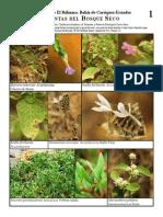 RM-038 Cordillera de El Bálsamo, Plantas del Bosque Seco.pdf