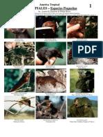RM-099 América Tropical, MARSUPIALES – Especies Pequeñas.pdf