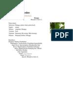klasifikasi tumbuhan mangga