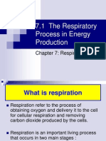 7.1 Respiratory Process in Energy Production