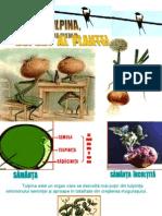 Tulpina Suport Al Plantei