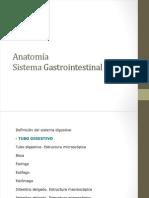 Anato fisiologia gastrico 1