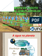 Tratamento de Esgoto Industrial Com Plantas de Bambu