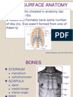 Thorax Surface Anatomy