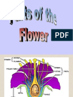 15 Parts of a Flower