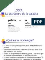 morfologia